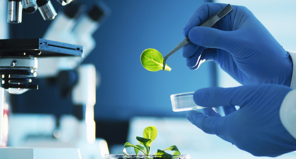 New Technologies as Accelerator of a Sustainable Bioeconomy