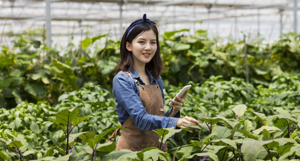 Chinese young farmer harvesting in organic farm.
