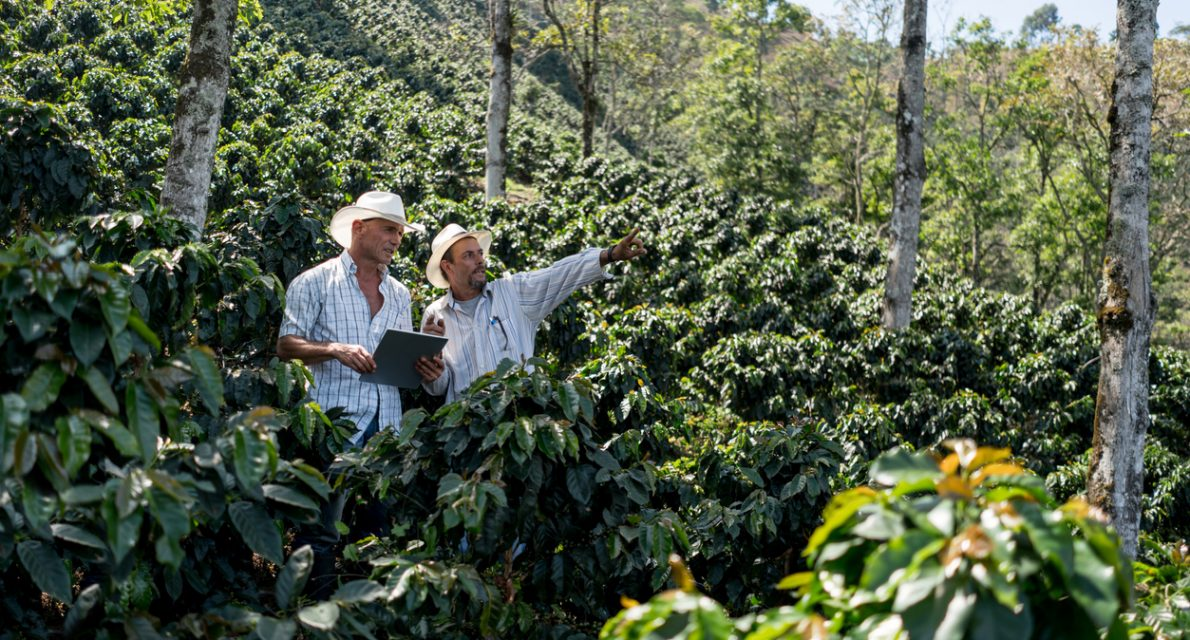 "Colombian men working at a farm harvesting coffee and talking about the plantation -"" agriculture concepts"